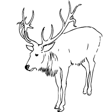 Caribou to Color Free