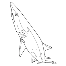 Coloring Page of Cladoselache Shark Printable