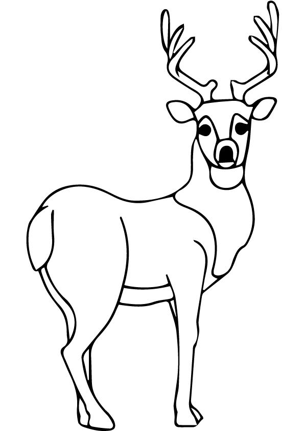 Cute-Deer