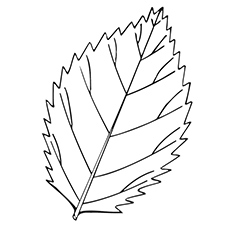 coloring sheet of elm leaf - Tree Leaves Coloring Page