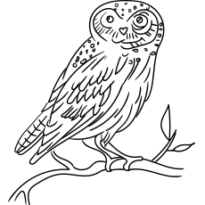 Eurasian Eagle Owl Coloring Page