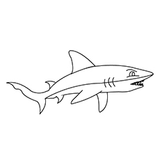Coloring Page of a Fierce Shark