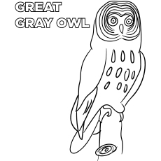 Great Gray Owl Coloring Pages To Print