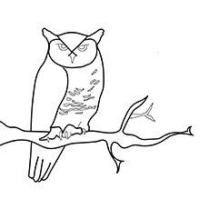 Great Horned Owl to Color-16