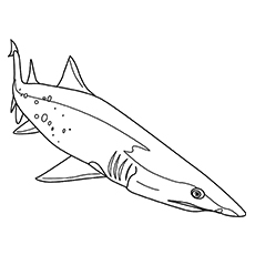 great white shark coloring pages printables