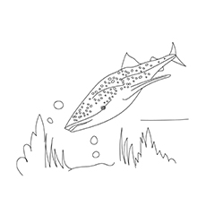 Horn Shark 17