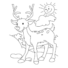 Indian Muntjac Deer Coloring Page