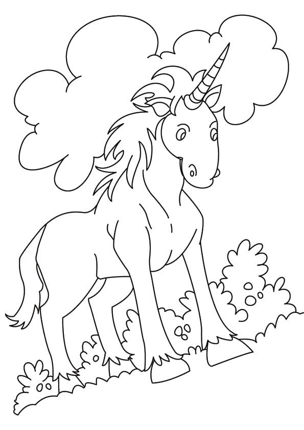 Indian-Unicorn-Equus-Assinoceros