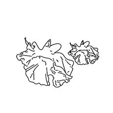 Lettuce-Leaf-16