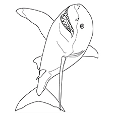 Top 20 Shark Coloring Pages For Your Little Ones Mako Shark Coloring Page