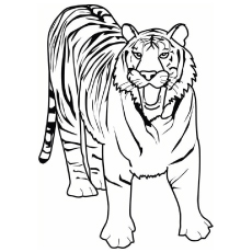 malayan tiger drawing - photo #10