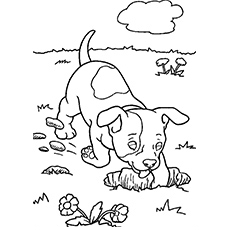max is the dag and companion coloring pages