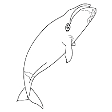 Shark Megalodon Coloring Pages