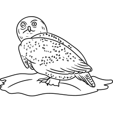 Northern Hawk Owl Coloring Pictures to Print