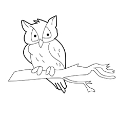 Owl Coloring Pages Western Screech