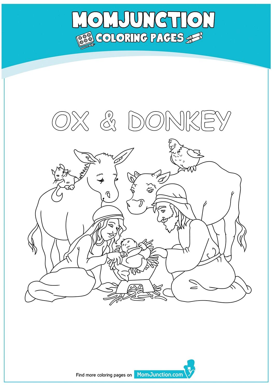 Ox-And-Donkey-17