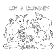 Ox And Donkey