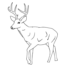 printable coloring sheet of sambar deer