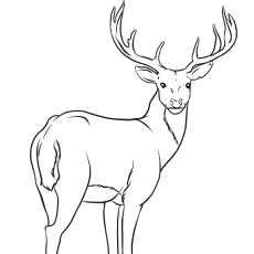 sika deer pic sheet to color free