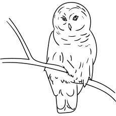 snowy owl large eye owl coloring page