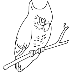 Coloring Sheet of Spotted Wood Owl