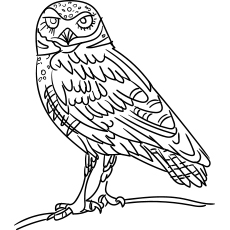 Striped Owl Coloring Sheet to Print