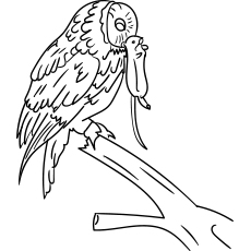 Tawny Owl Catch a Rat with Beak Coloring Pages