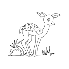Small Deer During Day Coloring Pages