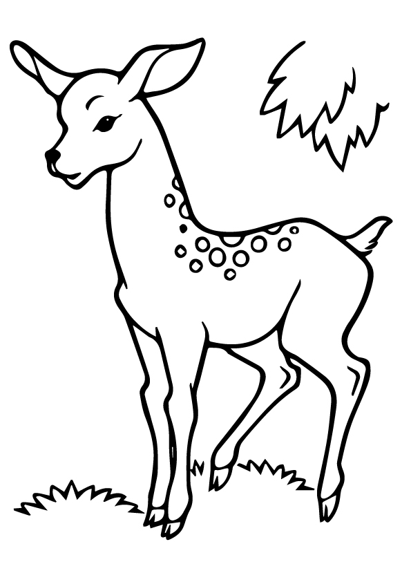The-line-art-deer-in-forest