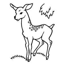 Deer in Forest Coloring Page
