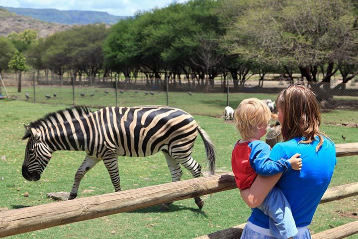 Visiting A Zoo