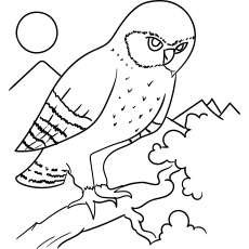 Western Screech Owl Coloring Page to Print