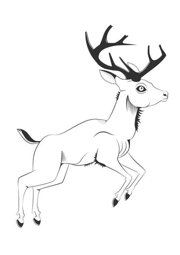 vintage-deer
