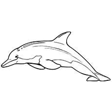 Dolphin Chinese White Coloring Pages