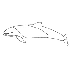 Commerson's Dolphin Pictures to Color