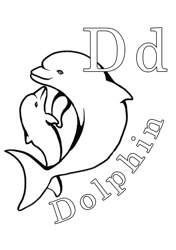 D-For-Dolphin