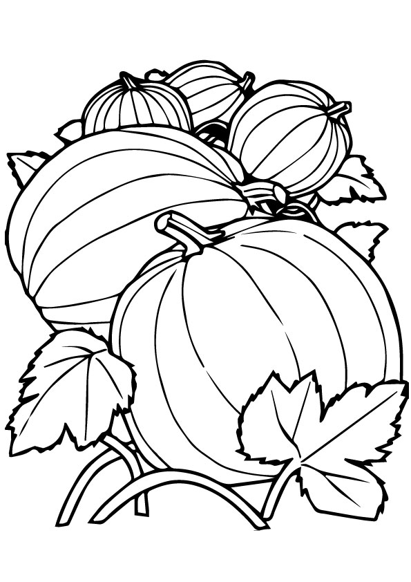 Group-Of-pumpkins