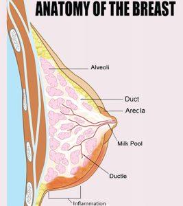 Mastitis Symptoms, Causes And Treatment