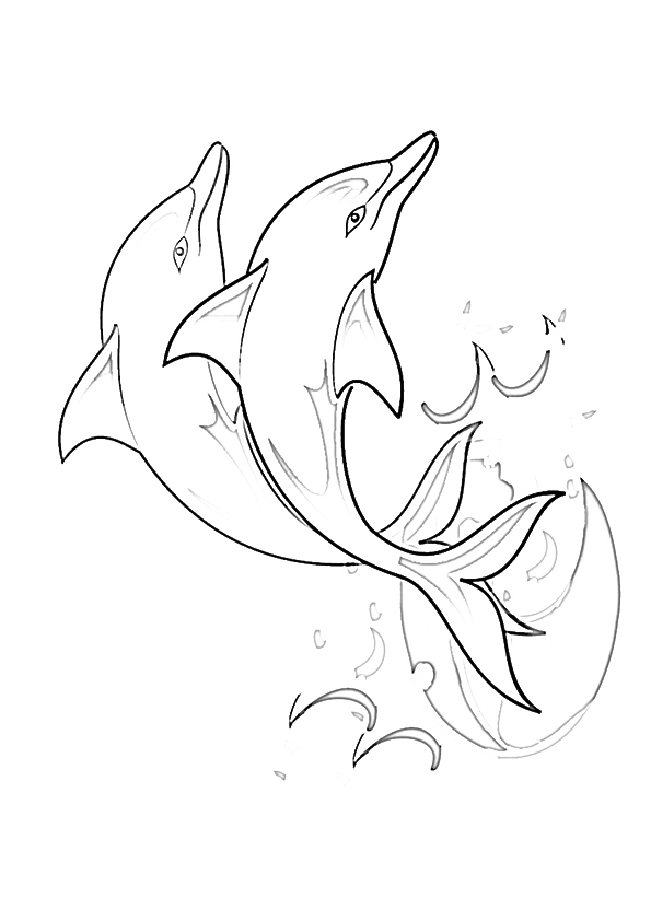 Soaring-Dolphin
