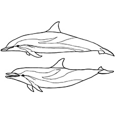 Striped Dolphin Coloring Page Printable