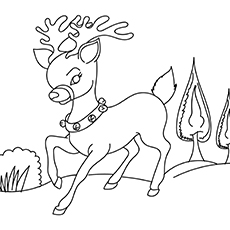 A Reindeer Coloring Pages Free