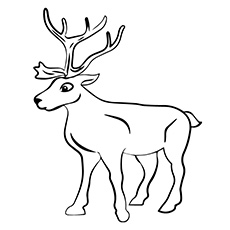Charming A Reindeer Coloring Pages St