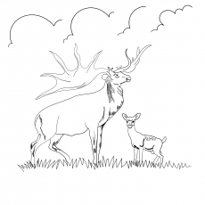 Caribou With Deer