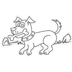 Cue Dog 17