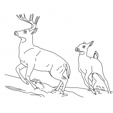 The Eurasian Woodland Reindeer