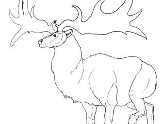 Top 20 Reindeer Coloring Pages For Your Little Ones