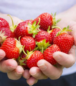 Is-It-Safe-To-Eat-Strawberry-During-Pregnancy