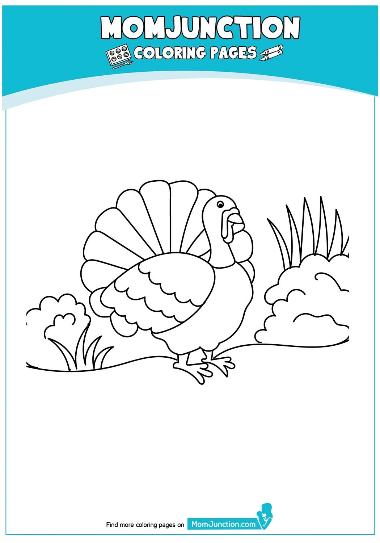 Thanksgiving-Turkey-17