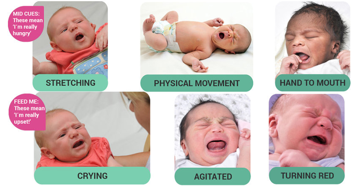 Babys Hunger Cues How To Identify Them-6376