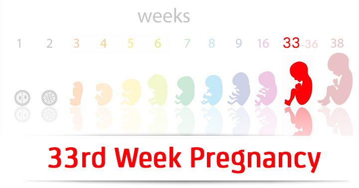 33rd Week Pregnancy Symptoms Baby Development And Bodily Changes